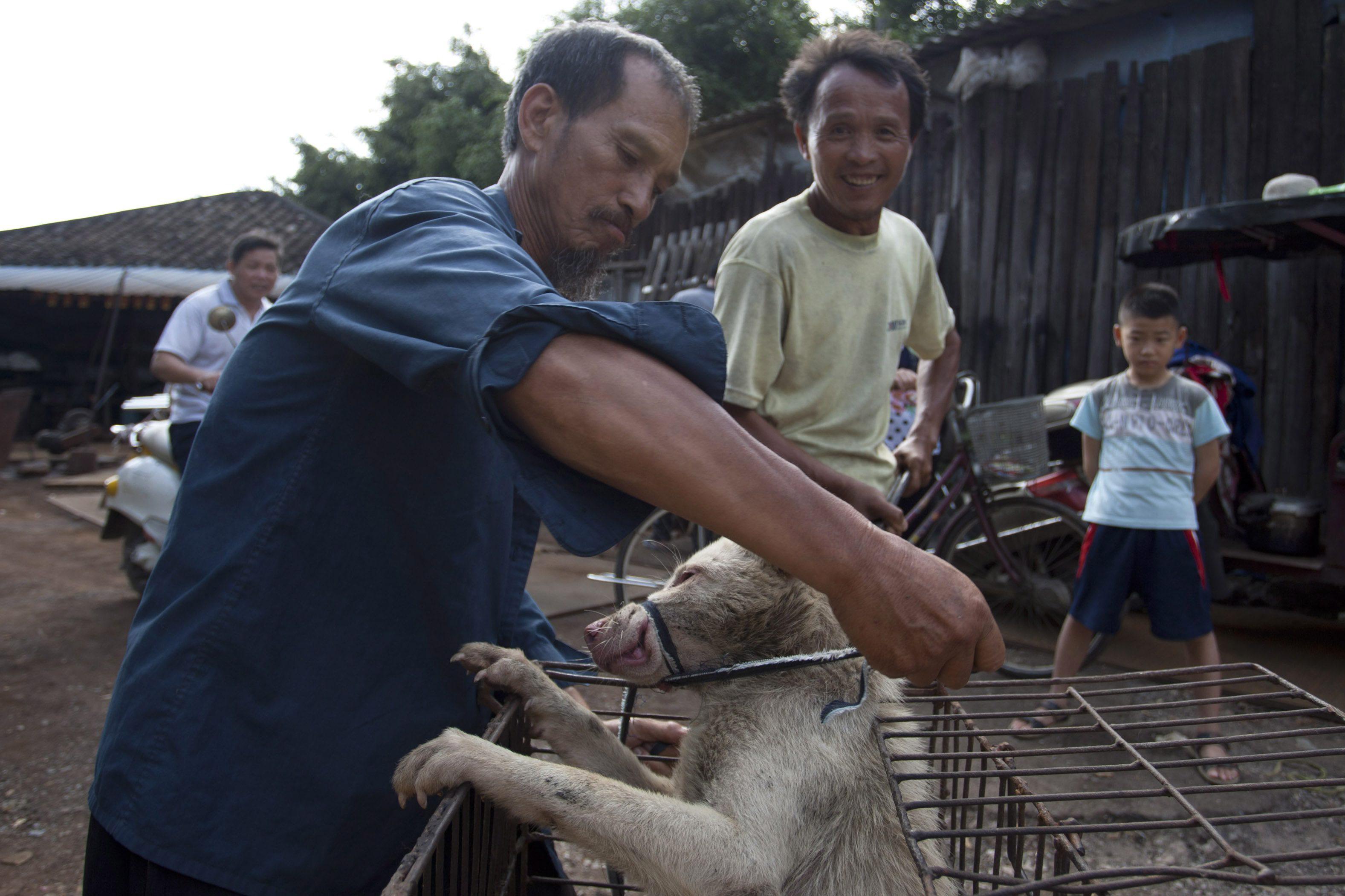 Die Heldin von Yulin | dasbiber - photo#46
