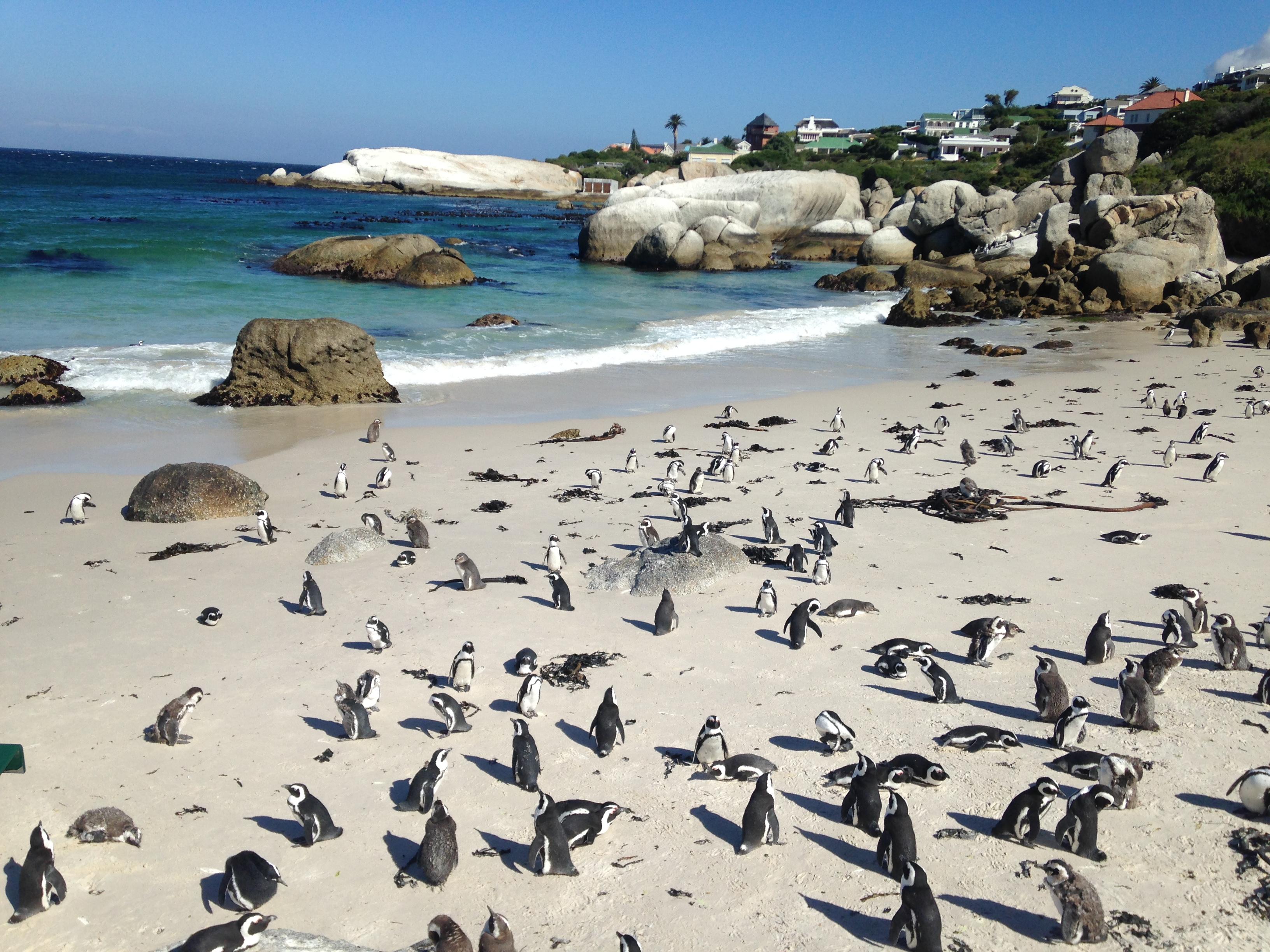 Kapstadt Südafrika Pinguine