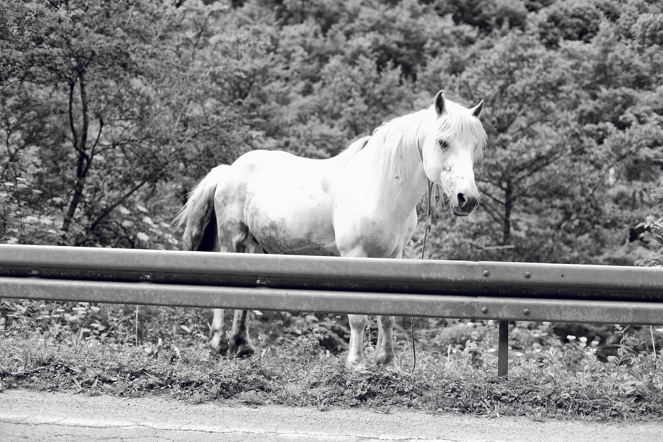 Kultur, Pferd, Einhorn, Marko Mestrovic