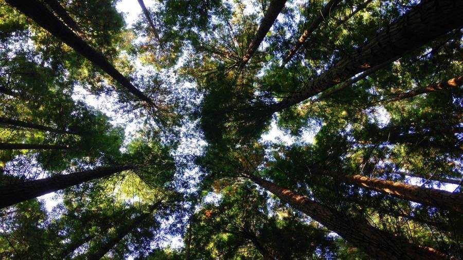 Bäume, Natur, Himmel, Umwelt